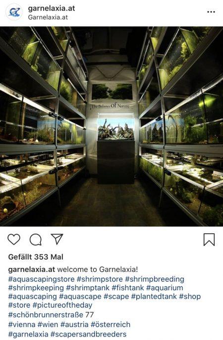 Social Media Marketing für Garnelaxia